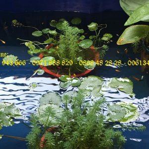 Bể bạt nuôi cá PVC/ Bồn nuôi cá tôm 2