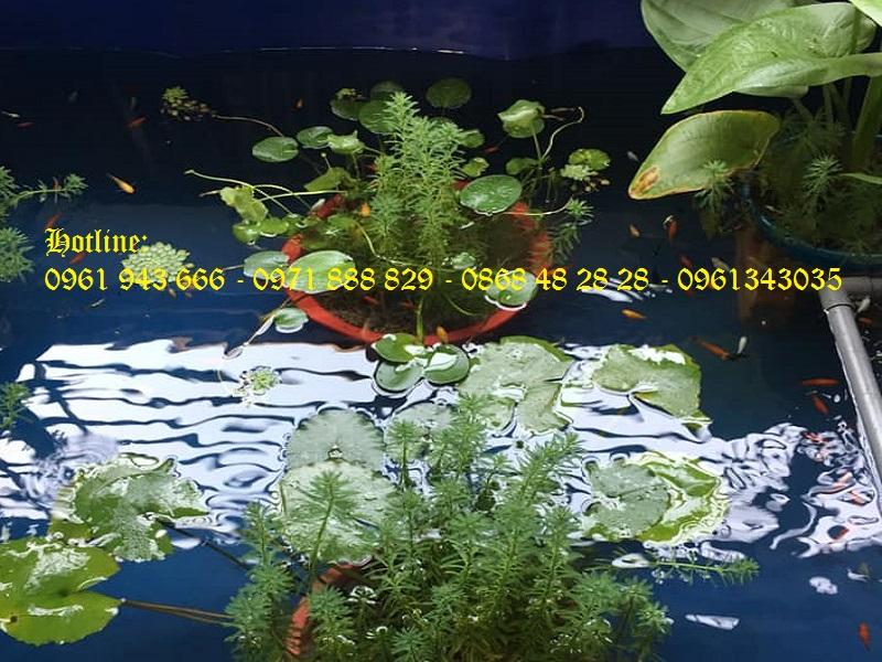Bể bạt nuôi cá PVC/ Bồn nuôi cá tôm 3